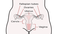 Female Reproductive System Practice