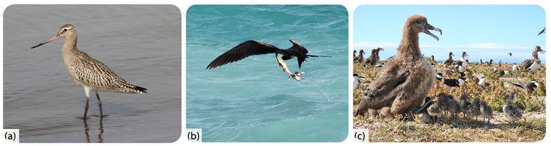 Picture of shorebirds, seabirds, and an albatross