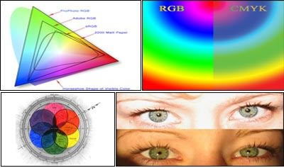 Evolution of Color Vision