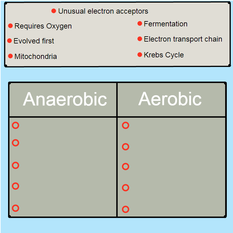 Aerobic vs anaerobic respiration advanced ck 12 foundation anaerobic vs aerobic respiration video types of respiration ccuart Gallery
