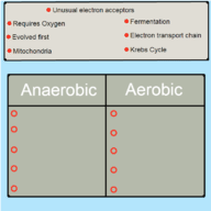 Types of Respiration