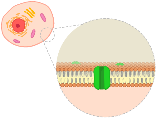 3.6 Membrane Proteins