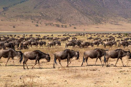 Animal Migration - Advanced