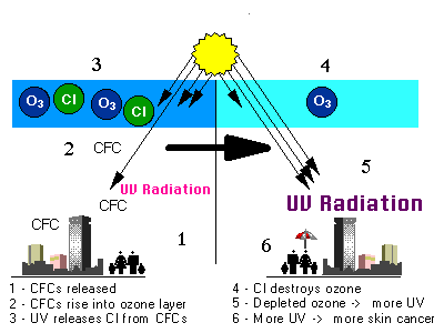 CFCs break down ozone in the stratosphere