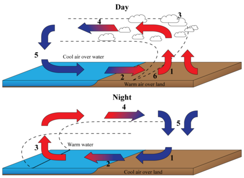 Diagram illustrating convection currents in an ocean