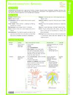 Invertebrates: Species Study Guide
