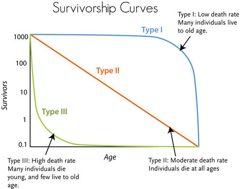Survivorship curves reflect death rates at different ages