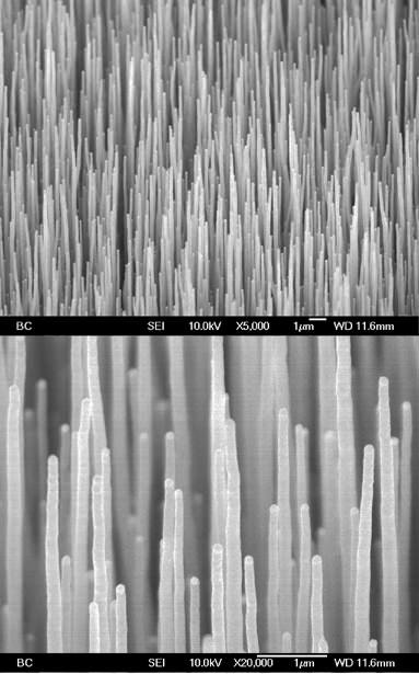 Single-wall carbon nanotubes
