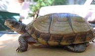 Importance of Reptiles Quiz - MS LS