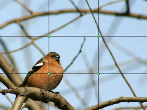 bird with rule of thirds grid overlay