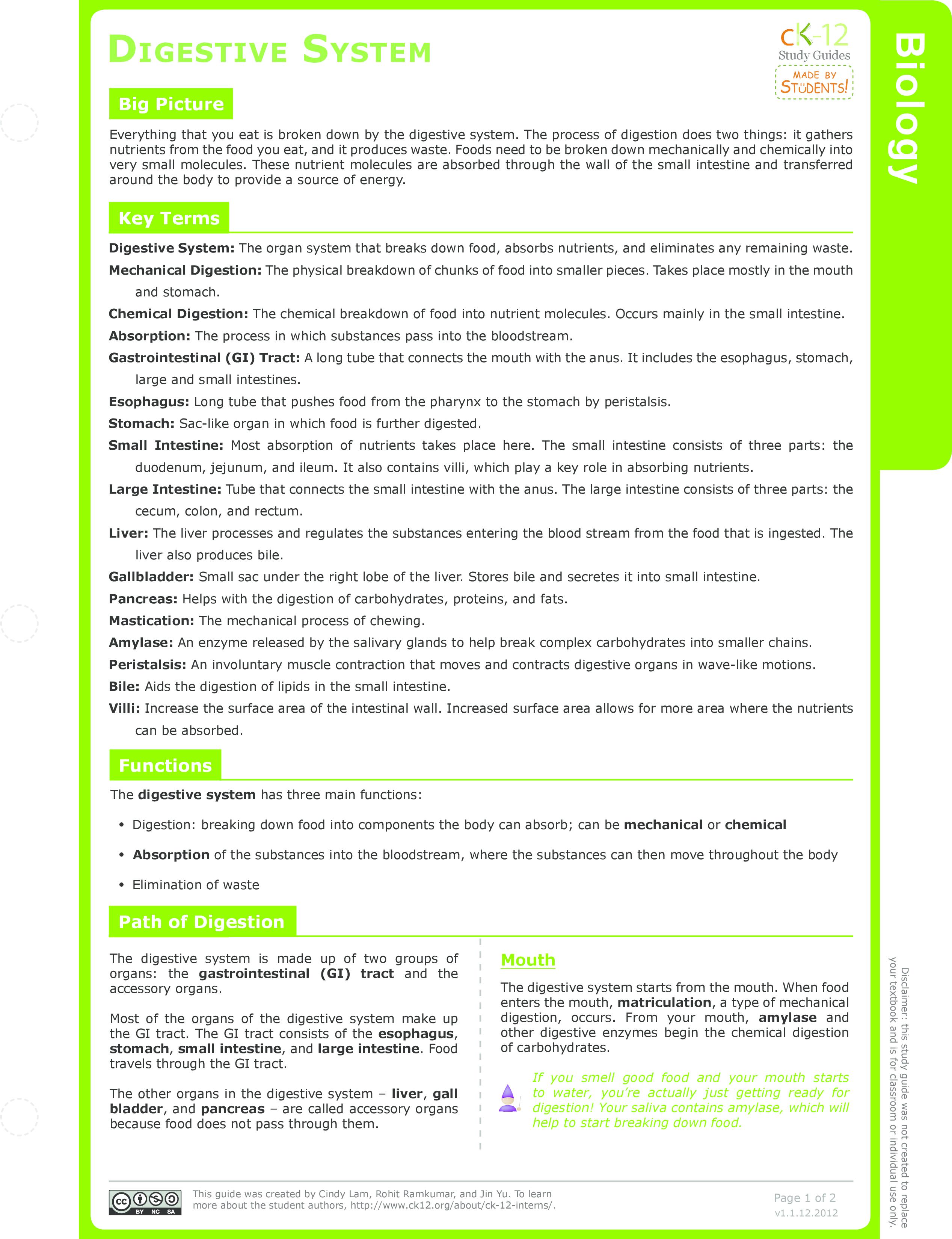 Digestive System Organs Ck 12 Foundation