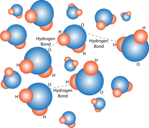Hydrogen Bonding in Water Molecule