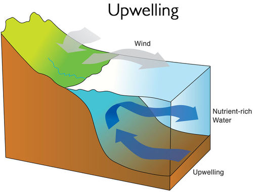 Diagram of upwelling