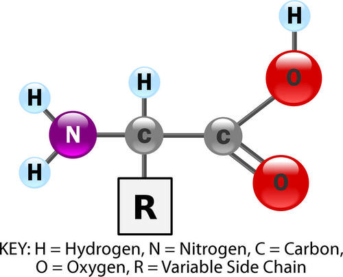 Proteins ( Read ) | Biology | CK-12 Foundation