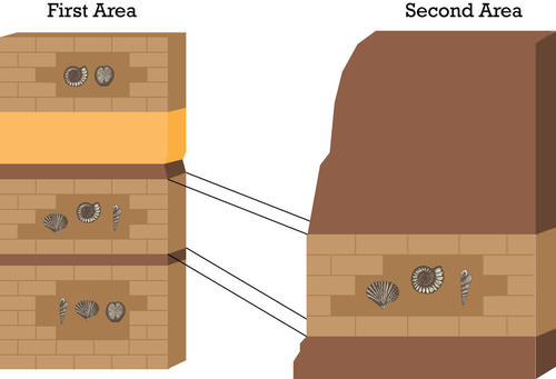 Diagram of how to use index fossils to match rock layers