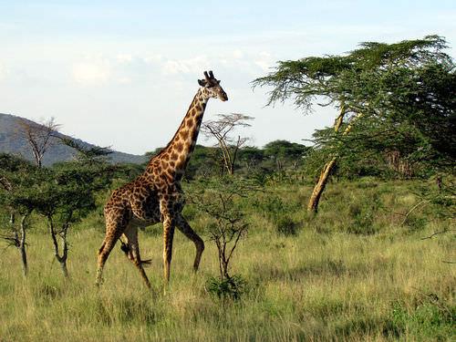 Mammal Ancestors