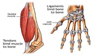 Keeping Bones and Joints Healthy