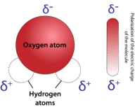Water is a very polar molecule because the oxygen is very electronegative