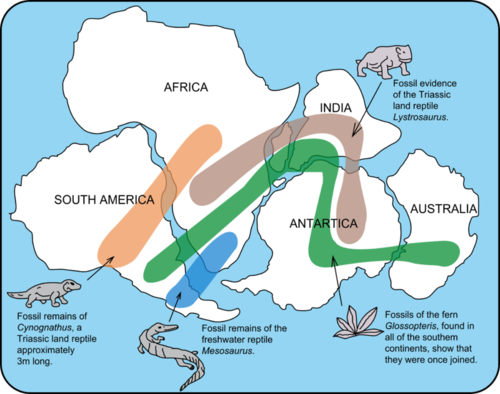 Fossil remains of organisms on South America and Africa