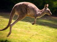 Placental Mammals