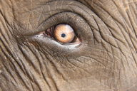 Elephant Insight