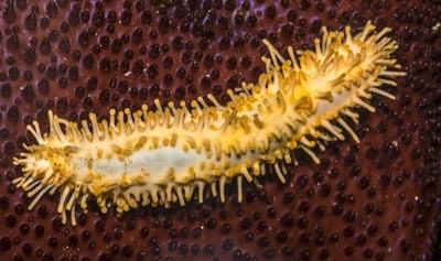 Smart Polymer Inspired by Sea Cucumbers