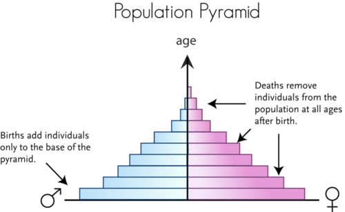Population pyramid represents the age and sex structure of a population