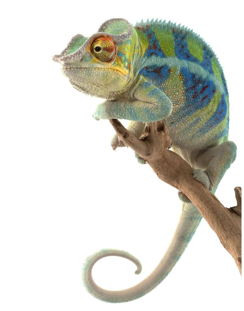 reptiles read biology ck 12 foundation