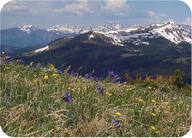 Alpine Tundra in the Rocky Mountains, Colorado