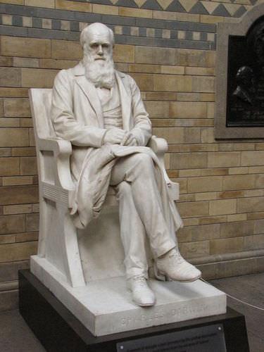 Darwin - Advanced