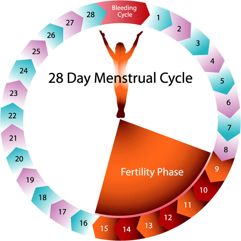 Image result for What Happens During the Menstrual Cycle?