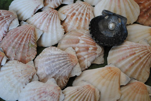 Importance of Mollusks