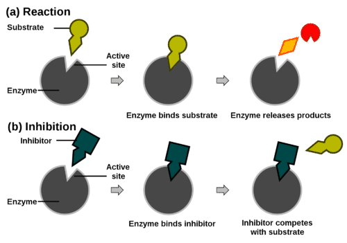 Diagram illustrating competitive inhibition