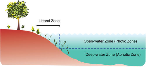 Diagram of the littoral, open-water, and deep-water zones in a lake