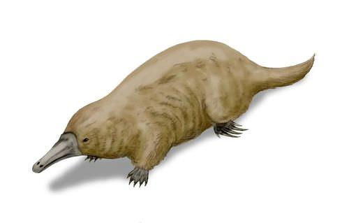 Steropodon illustration: monotreme ancestor