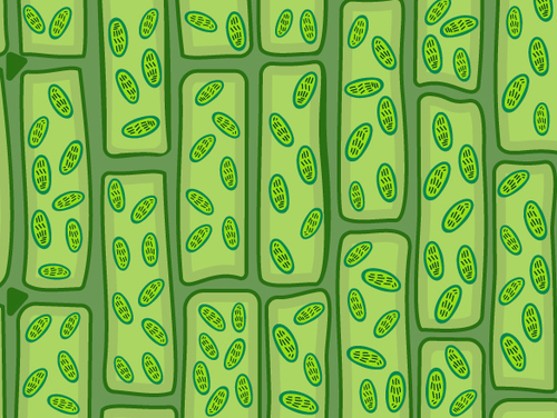 Plant Cell Structures