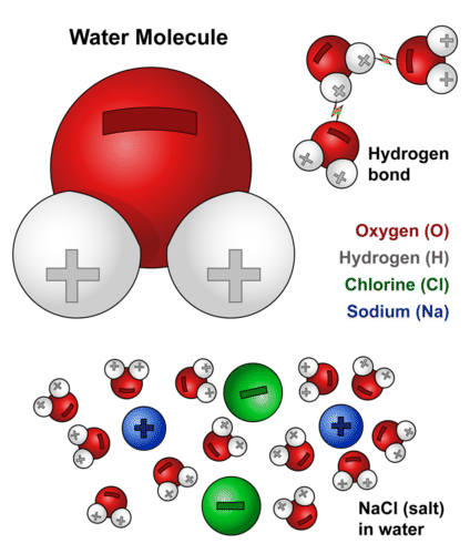 Structure of water molecule and solvation