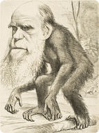 Darwin evolution cartoon