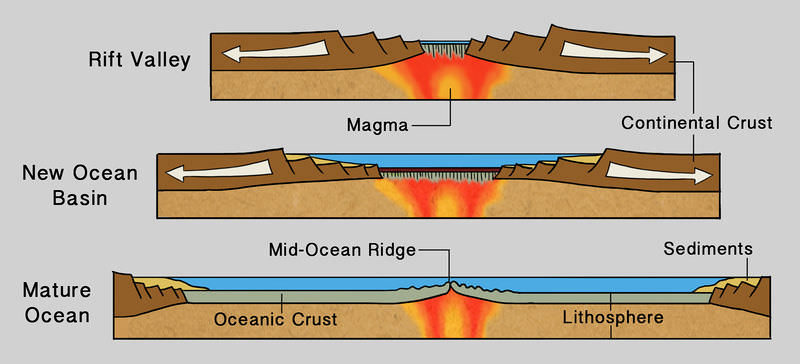 Plate divergence creates a rift valley or a new ocean basin