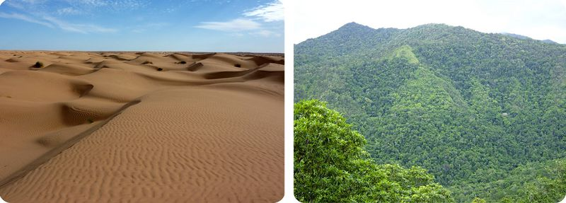 A desert and a rainforest are different biomes, even though both are roughly at the same distance from the equator