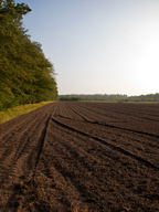 The soil beneath a deciduous forest is a pedalfer, which are very fertile