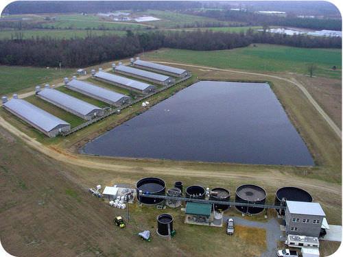 A pond of hog manure