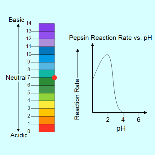 Acids and Bases in Biology: Pepsin Biology