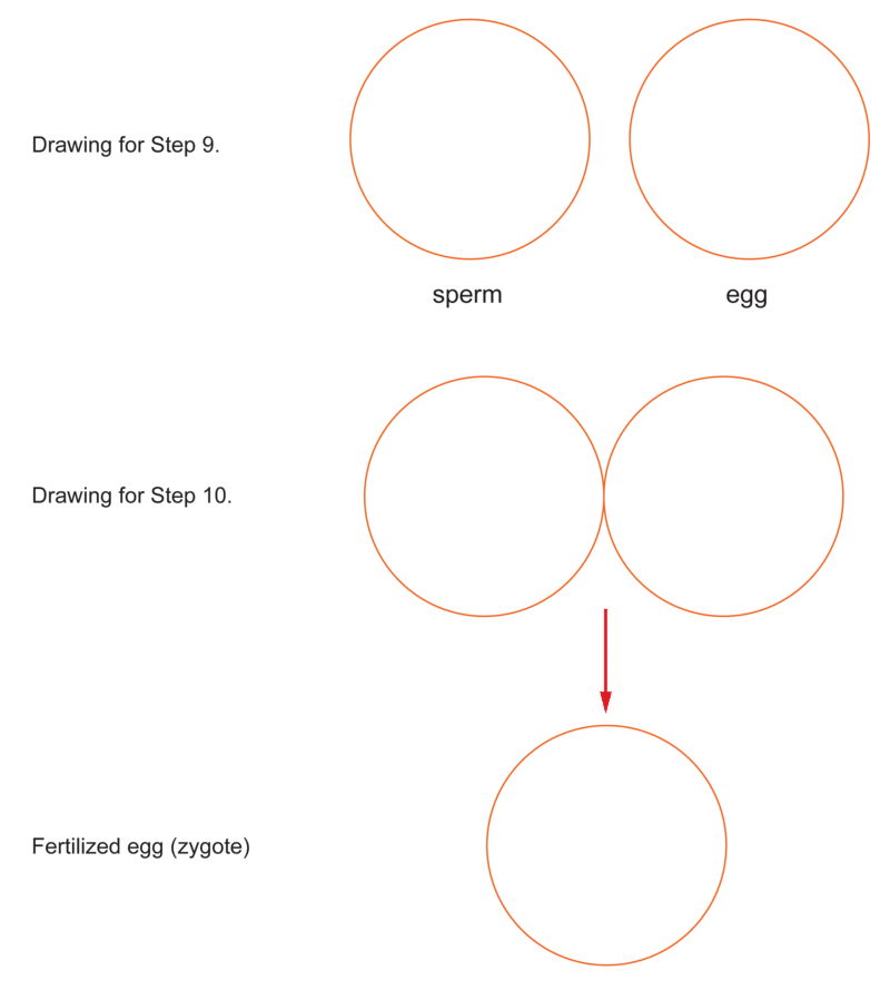 Mitosis Worksheets Heygotomaps – Mitosis Worksheets