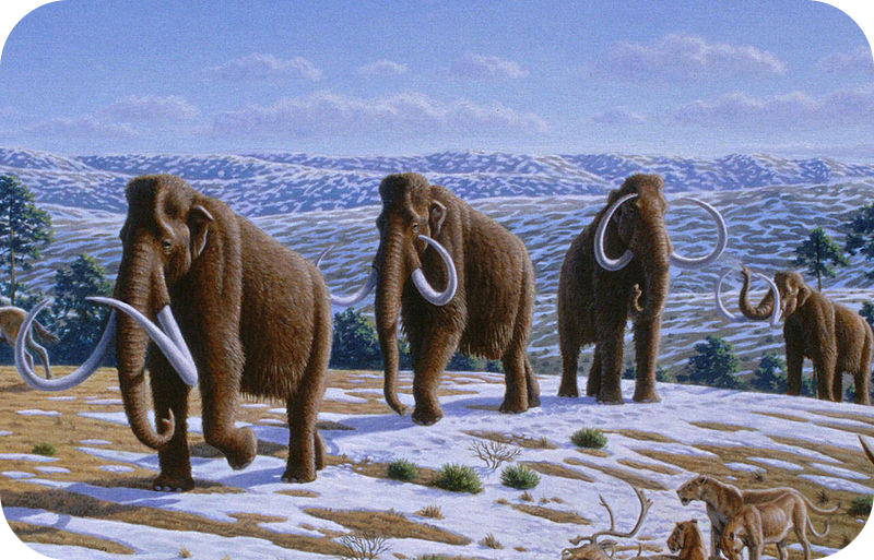 Teaching History of Cenozoic life