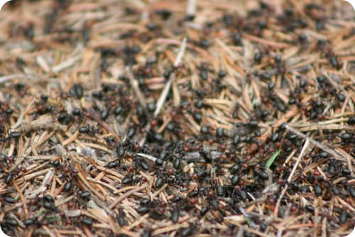 Ant colony searching for food