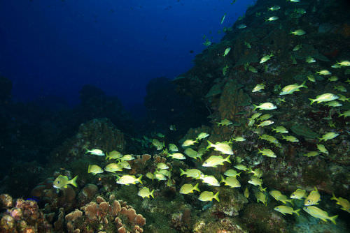 This school of fish are members of the same species and population
