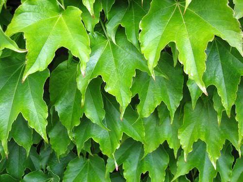Flowering Plant Tissues - Advanced