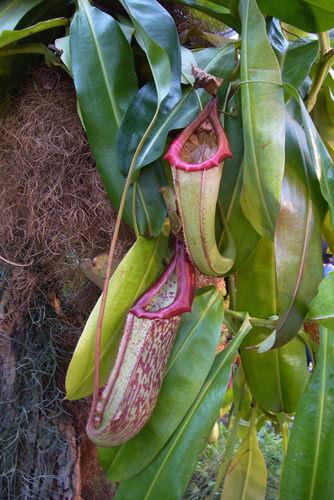 Carnivorous Plants - Advanced