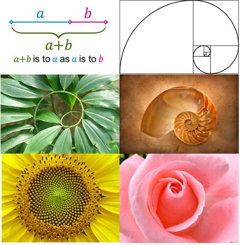 There is Beauty in the Golden Ratio!